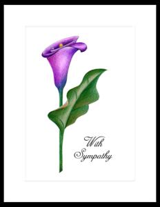 FL 10a - cala lily